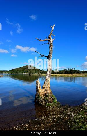 Dead tree,Ullswater Lake,Lake District National Park,Cumbria,England,UK - Stock Image