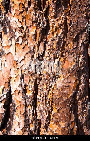 Brown Bark - Stock Image