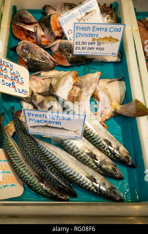 A Liddle and Sons fishmongers display of fresh whole Mackerel, Cod Shoulders and Salmon Heads Darlington covered market - Stock Image