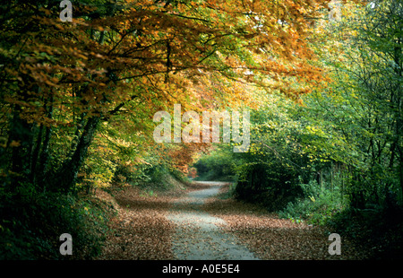 A Leafy Lane in Autumn, Whippendell Woods, Hertfordshire, UK - Stock Image