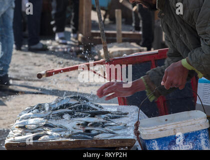 Fresh seafood for sale on Moroccan fishing harbour. - Stock Image