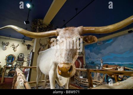 Buckhorn Saloon and Museum San Antonio Texas tx white longhorn steer iconic museum symbol - Stock Image
