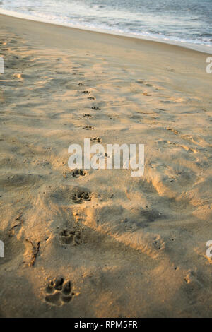 Paw Prints In The Sand - Stock Image