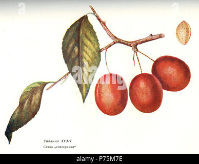 Russian botanist and illustrator. N/A 165 Michurin 1936 116 - Stock Image