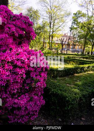 Italy, Tuscany, Florence, botanic garden - Stock Image