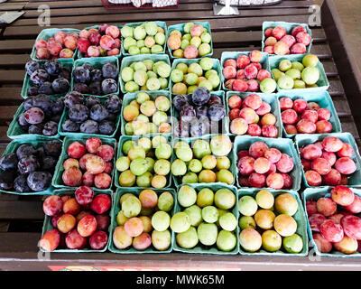Baskets of ripe plums of various colors and varieties on sale at a roadside market or farmer's market in Alabama, USA. - Stock Image