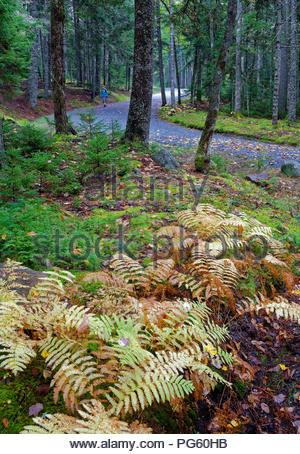 Fall scene in Acadia National Park, Maine - Stock Image
