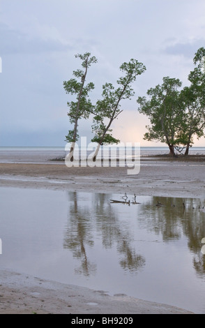 Trees and estuary, Bako National Park, Bako, Sarawak, Borneo - Stock Image