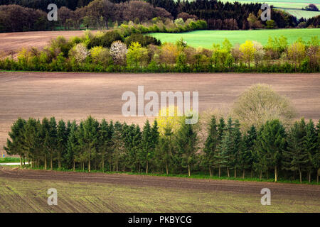 Rural field separated by small pine tree forests seen from above - Stock Image