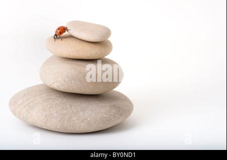 ladybug on pile of stones isolated on white - Stock Image