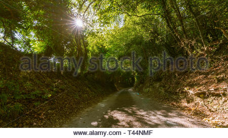 shrouded countryside road in of the Chiltern Hills in England - Stock Image
