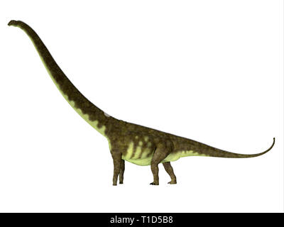 Mamenchisaurus hochuanensis was a herbivorous sauropod dinosaur that lived in China during the Jurassic Period. - Stock Image