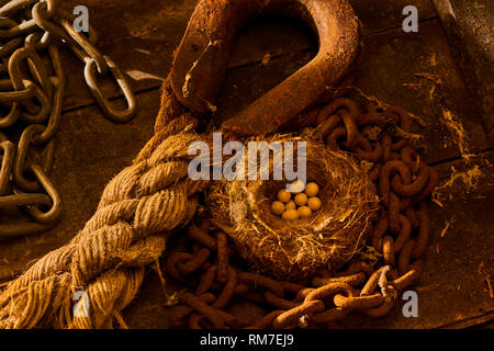 Birdsnest with eggs in disused Boat Shed - Stock Image