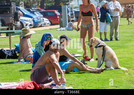 Family with their pet labrador relaxing at Palm beach in Sydney,Australia - Stock Image