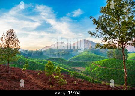 Amazing landscape view of tea plantation before sunrise nature background - Stock Image