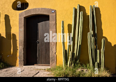 Mexican fencepost cactus grows along the Aranzazu Chapel and San Francisco Convent in the Plaza de Aranzazu in the state capital of San Luis Potosi, Mexico. The chapel and convent was built between 1749 and 1760 and features Churrigueresque details and tiled domes. - Stock Image