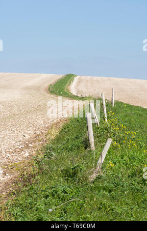 path and grass edge with old fence leading up through chalky fields leading up to  St. Roche's Hill, the Trundle, Sussex, UK, April. South Downs. - Stock Image