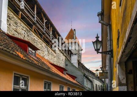 The ancient defensive city wall and Tower behind Monks of the medieval city of Tallinn, Estonia, at twilight, on the coast of the Baltic Sea - Stock Image