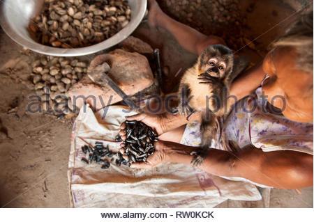 Piaraçu village (Aldeia Piaraçu), Mato Grosso State, Brazil. A Kayapo woman holds a handful of cumaru (Dipterix odorata, Tonka beans) kernels while her pet monkey looks up. - Stock Image
