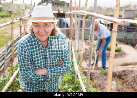 Mature woman gardener working with tomatoes bushes near trellis, family in garden outdoor - Stock Image