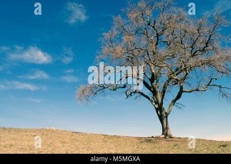 A single tree sits on a hill at Sierra Vista near San Jose. - Stock Image