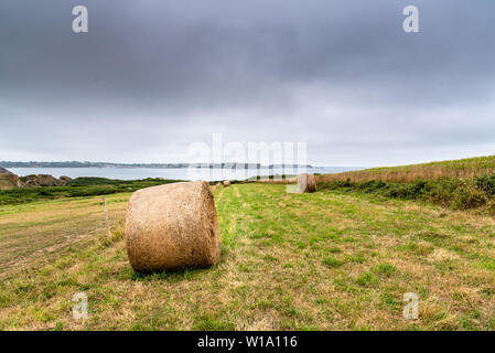 Field with hay bales after harvest in summer against cloudy sky. Copy space - Stock Image