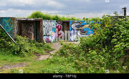 Historic WW2 Purdown heavy anti-aircraft battery for protection of the city of Bristol, now derelict and covered in graffiti and brambles - Stock Image