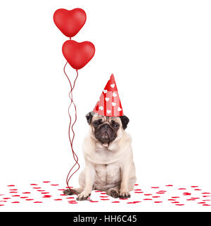 lovely cute pug puppy dog sitting down on confetti, wearing party hat and holding red heart shaped balloons, isolated - Stock Image