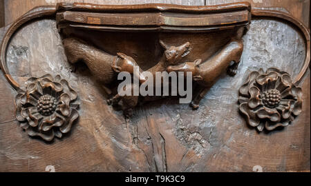 A medieval misericord depicting a fox caught by the watchdogs of the community, Ripon Cathedral, Yorkshire, UK - Stock Image