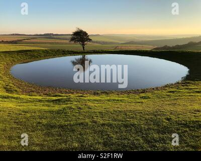 Lone tree and pond on South Downs Way west of Ditchling Beacon, Sussex, in glorious November afternoon weather. - Stock Image