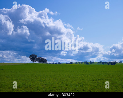 Lush green pastures & clouds - Stock Image