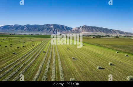 Half harvested field of hay in a western American farm. - Stock Image