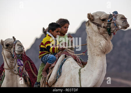 Bedouin kids riding camel. Sharm el Sheikh. Egypt - Stock Image