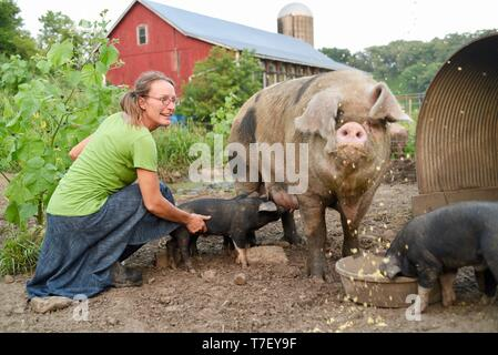 Woman farmer and catering chef on her working pig farm, Blanchardville, WI, USA - Stock Image