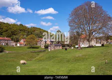 Sheep grazing on the village green, Hutton-le-Hole, North York Moors, Yorkshire, UK - Stock Image