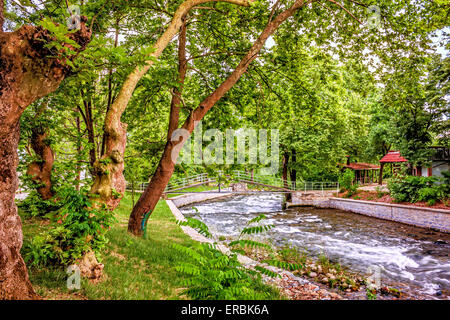 Under the trees in park, close to river - Stock Image