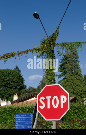 Stop sign and climbing vegetation on lamppost, Italy - Stock Image
