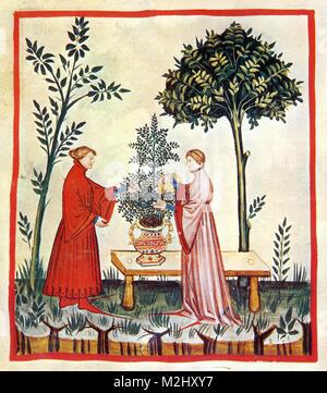 'Tacuinum Sanitatis', Sweet Marjoram - Stock Image