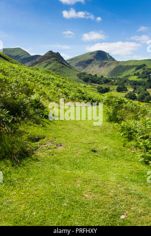 A less used grassy path near Littletown on the eastern slope of Newlands valley Cumbria. In the distance is Scope End with Hindscarth. - Stock Image