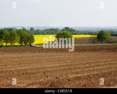 Ploughed field in Oxfordshire. Yellow oil seed rape and trees in background - Stock Image