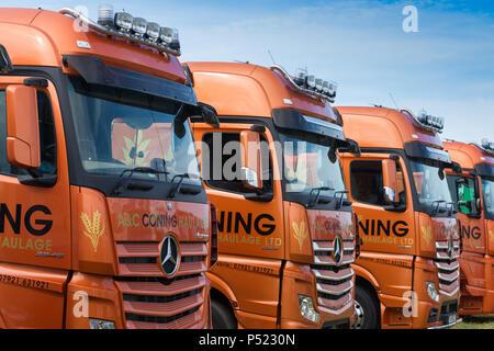 Fleet of HGV lorries - Stock Image