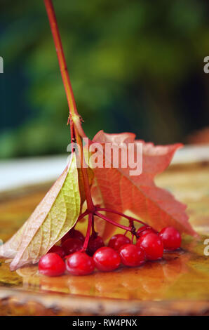 Berries of a mountain ash in water - Stock Image