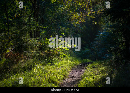 Walk path in forest - Stock Image