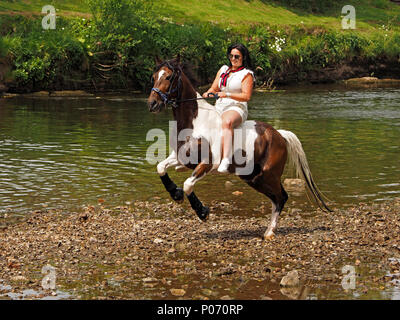 female traveller dressed in white riding rearing horse beside the water after washing it in the River Eden, Appleby-in Westmorland at the crowded annual Appleby Horsefair, Cumbria England  UK, 8 June, 2018. horse rearing with female rider beside River Eden Credit: Steve Holroyd/Alamy Live News - Stock Image