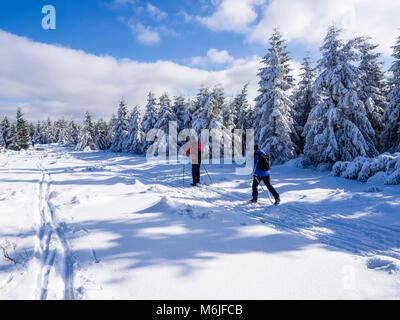Winter landscape, loipe, cross country skiing area,  near Hanskühnenburg, Harz mountain range, Lower Saxony, - Stock Image