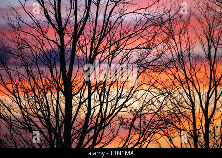 Silhouetted trees against a colorful sunset sky in Metro Atlanta, Georgia. (USA) - Stock Image