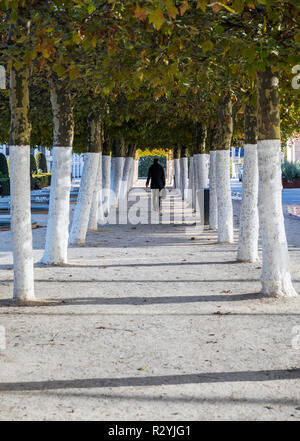 Man walking in alley tree, Mont des Arts in Brussels - Stock Image