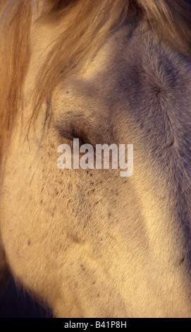 Part of the head of a white horse - Stock Image