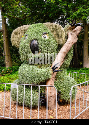 Topiary koala bear at The Royal Botanic Garden, 74 acres adjacent to the central business district of Sydney, New South Wales, Australia. - Stock Image