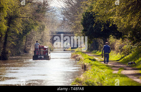 Narrow boat on the Macclesfield canal waterway at Buglawton congleton Cheshire England UK with man walking dog along the towpath - Stock Image